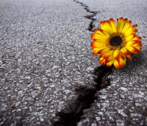 Infraestructuras resilientes -flexibles- ante fenómenos extremos (desastres naturales y situaciones extremas relacionadas con la seguridad)